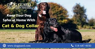Dog Guard Provides Pet Safe Underground Dog Fence Collar In Different Colors It Has Quick Release Clasps And Provided In Different Sizes Dogs Dog Fence Pet Safe