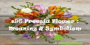 96 freesia flower meaning symbolism