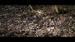 Two Theories of Place, Joel Scott-Halkes on Vimeo