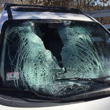 turkey smashes into windshield