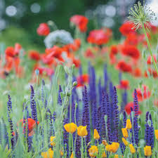 mini meadows for your yard s toughest
