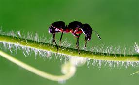 Download Ant Killer Outside House  Background