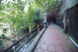 Image result for mảnh vườn