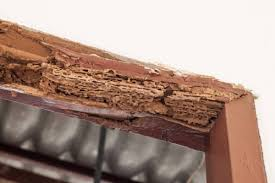 how much damage can termites really