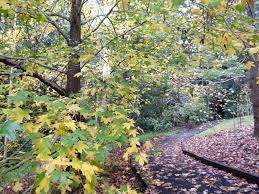 It's Beginning to feel a lot like.......AUTUMN - Tamborine Mountain Botanic  Gardens