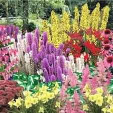 effortless perennial garden planting