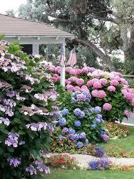 flowering shrubs for shade gardens
