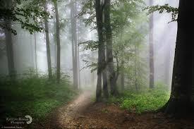 Magiczny las w Bieszczadach - zdjęcie - Fotoblog kasiabochniak.flog.pl