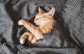 Cute little ginger kitten sleeping in gray blanket | Premium Photo