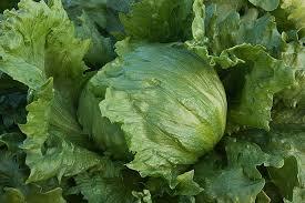 don t on iceberg lettuce takepart