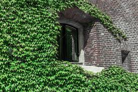 The Window Of The House Is Wrapped In Ivy. Green Leaves On The.. Stock  Photo, Picture And Royalty Free Image. Image 129010992.