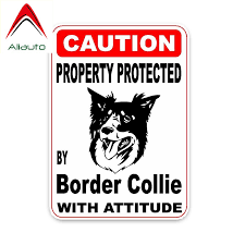 Border Collie Decal Shop The Nation