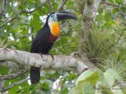 Angeline Smith-Parasram   the Internet Bird Collection   HBW Alive