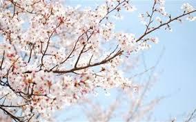 spring mac wallpapers free hd