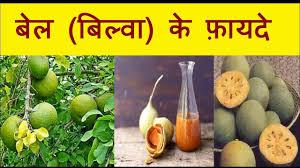 amazing health benefits of bel patra