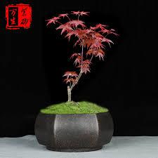 bonsai pot unglaze hexagon flowerpots
