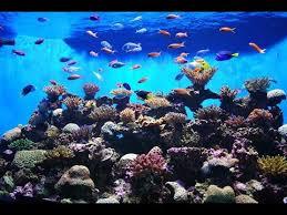the best 3d aquarium live wallpaper hd