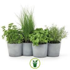Graines de Plantes aromatiques et condimentaires en mélange 100 graines