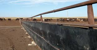 One Company S Junk Is Another S Windbreak Beef Magazine