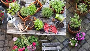 a simple guide to growing edible plants