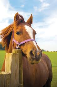 Equine Electric Fencing Horse Solar Powered Nemtek