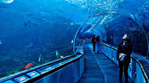 aquarium of the bay san