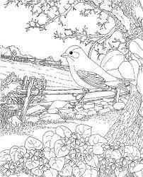 Adult Coloring Page Spring Kleurplaten Adult Coloring Pages
