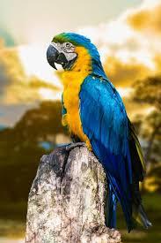 macaw wallpaper s39s139 picserio