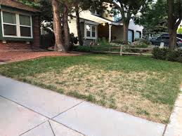 lawn disease control what to do and