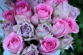 اجمل بوكيه ورد موف باقة من الورد الموف الجميل رهيبه