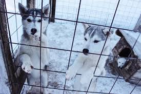 The Right Fence For Your Dog Kennel The Fence Masters