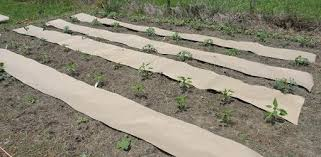 how to weed proof a vegetable garden
