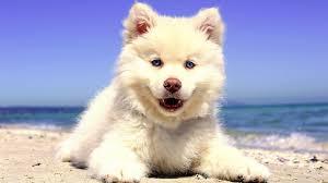 4k beach puppy wallpaper hd