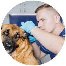 top 7 best dog breath fresheners