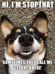 hilarious dogs captions to brighten your day playbarkrun