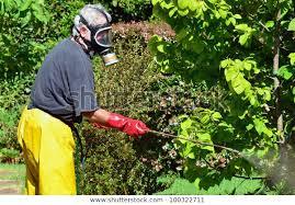 active senior man spraying plants home