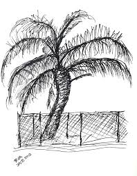 Palm Tree With Chain Link Fence Drawing By J Nell B
