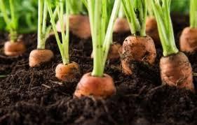 best vegetable garden layout plans