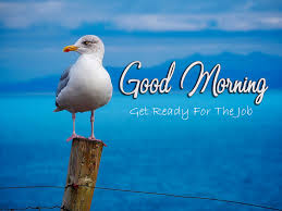 Best Good Morning Wishes With Birds Pic - Good Morning Images ...