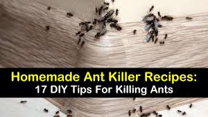 17 diy ant recipes for indoors out