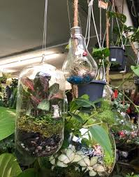best and closed terrarium plants for