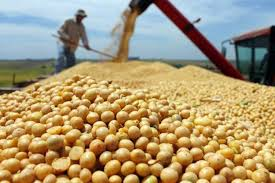 اهمیت کنجاله سویا در تامین پروتئین لازم در جیره طیور