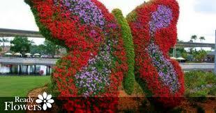 dubai miracle garden continues to