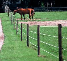 Electrobraid Horse Fencing Rick S Custom Fencing Decking