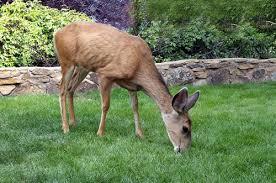 Deer Fence Deer Fencing Hardware Nixalite