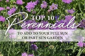 top 10 perennials for full or part sun