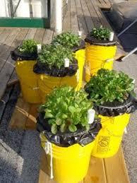 urban gardening the sip way
