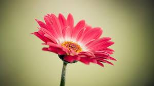 اجمل الازهار المتحركة