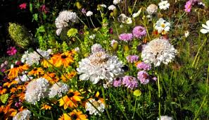 annual flowers for attracting bees