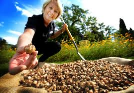 It's a blooming big job to plant thousands of flowers | Oxford Mail
